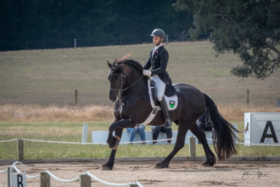 Dressage Club of South Australia Nov 2018